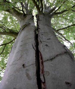 træernes hemmelighed